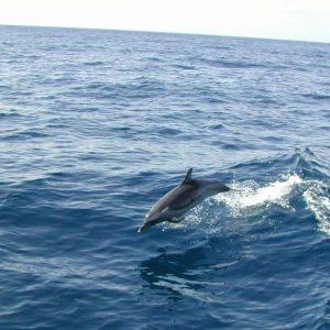 Plongée et découverte des cétacés
